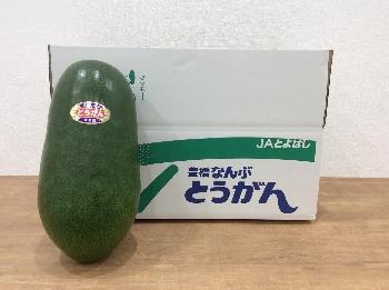 [L-2]冬瓜 (3玉入り)
