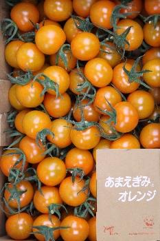 [T-2]『あまえぎみ』オレンジ 1kg