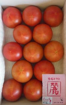 [H-2]トマト 麗 1kg